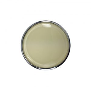 Horn button for Banjo steering wheel - Ivory - Interior - Shifters and steering wheels - Flat-4 steering wheels and accessories  - Generic